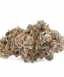 Where to buy tahoe og kush marijuana plant near me